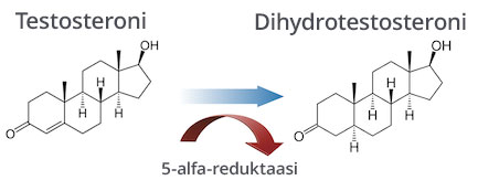 Testosteroni, 5-alfa-reduktaasi ja dihydrotestosteroni