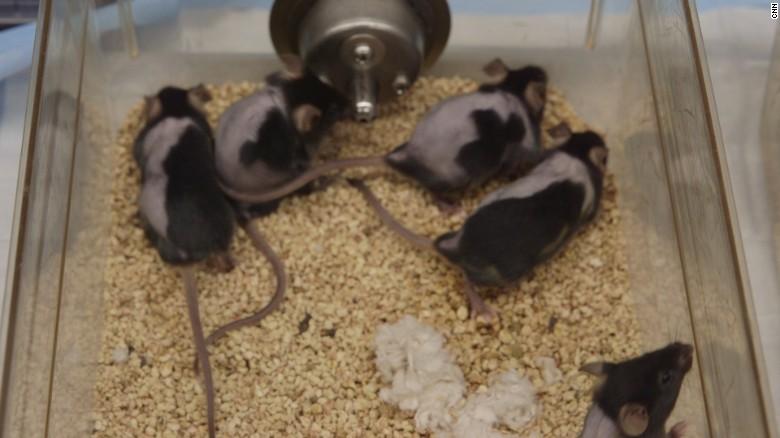 Xeljanz-lääkettä saaneita hiiriä